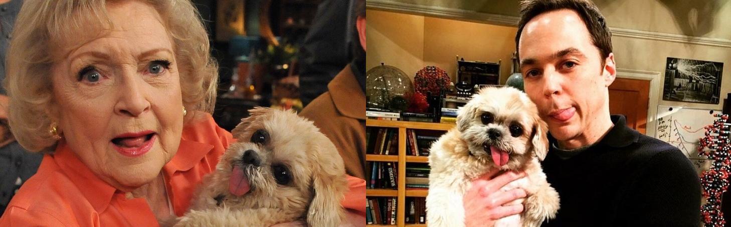 Marnie the dog - Perro Instagram - Historia Perrita adoptada - Famosos - Sheldon Cooper