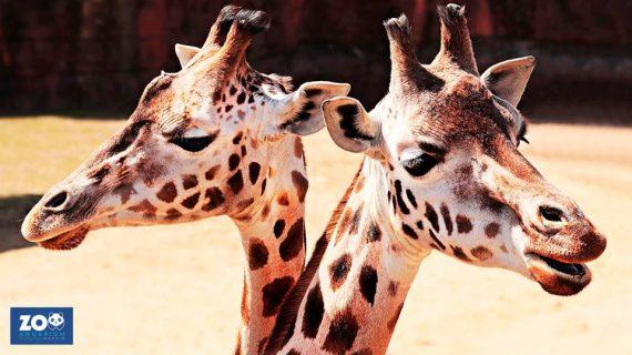 Zoo Madrid - Ecovidirio - Reciclaje